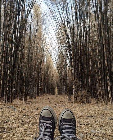 Photo0 Jpg Picture Hutan Bambu Taman Sakura Keputih Sukolilo Kota
