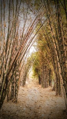 Psx 20151019 144915 Large Jpg Foto Hutan Bambu Taman Sakura