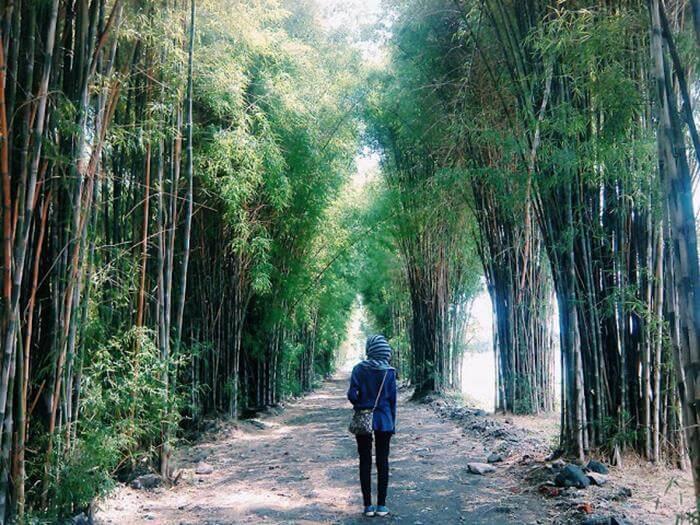 Rute Harga Tiket Masuk Hutan Bambu Keputih Spot Wisata Ngehits