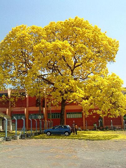 Surabaya Bangun Taman Sakura Neighborhoodnursery Keputih Kota