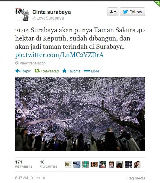 Surabaya Bangun Taman Sakura Turis Dunia Berdatangan Musimnya Melihat Bermekaran