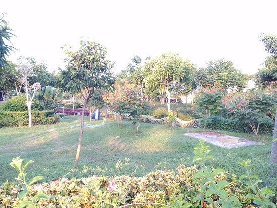 Taman Foto Hutan Bambu Sakura Keputih Sukolilo Surabaya Kota