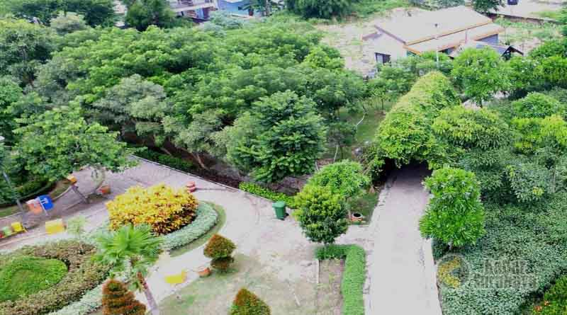 Taman Harmoni Keputih Wisata Bunga Sakura Surabaya Kabar Kota