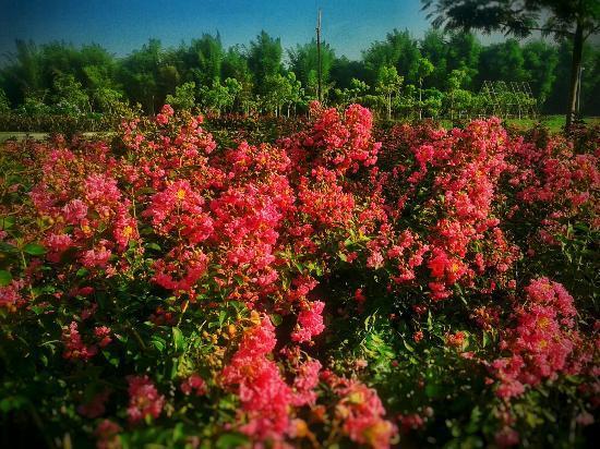 Taman Harmoni Surabaya Tpa Sampah Disulap Menjadi Bunga Sportourism Sakura
