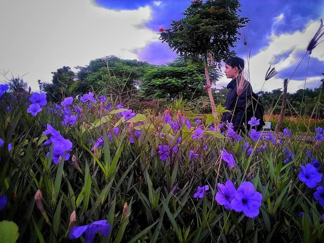 Taman Instagenic Surabaya Sakura Keputih Kota