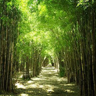 Taman Keputih Surabaya Sakura Information Kota