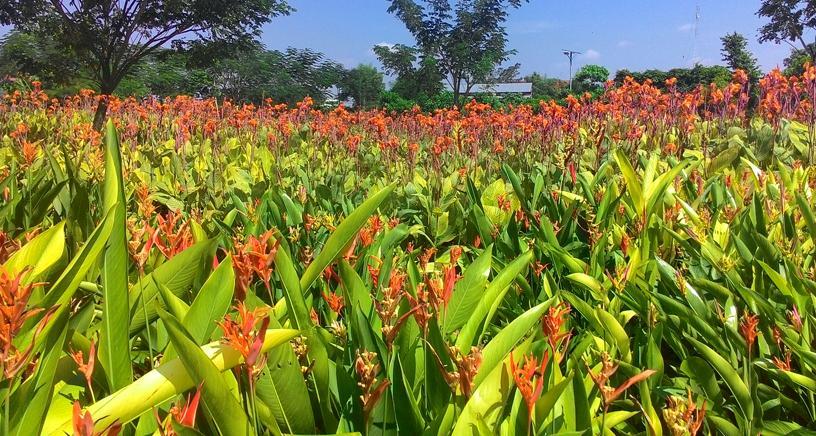 Taman Sakura Surabaya Soerabaja Keputih Kota