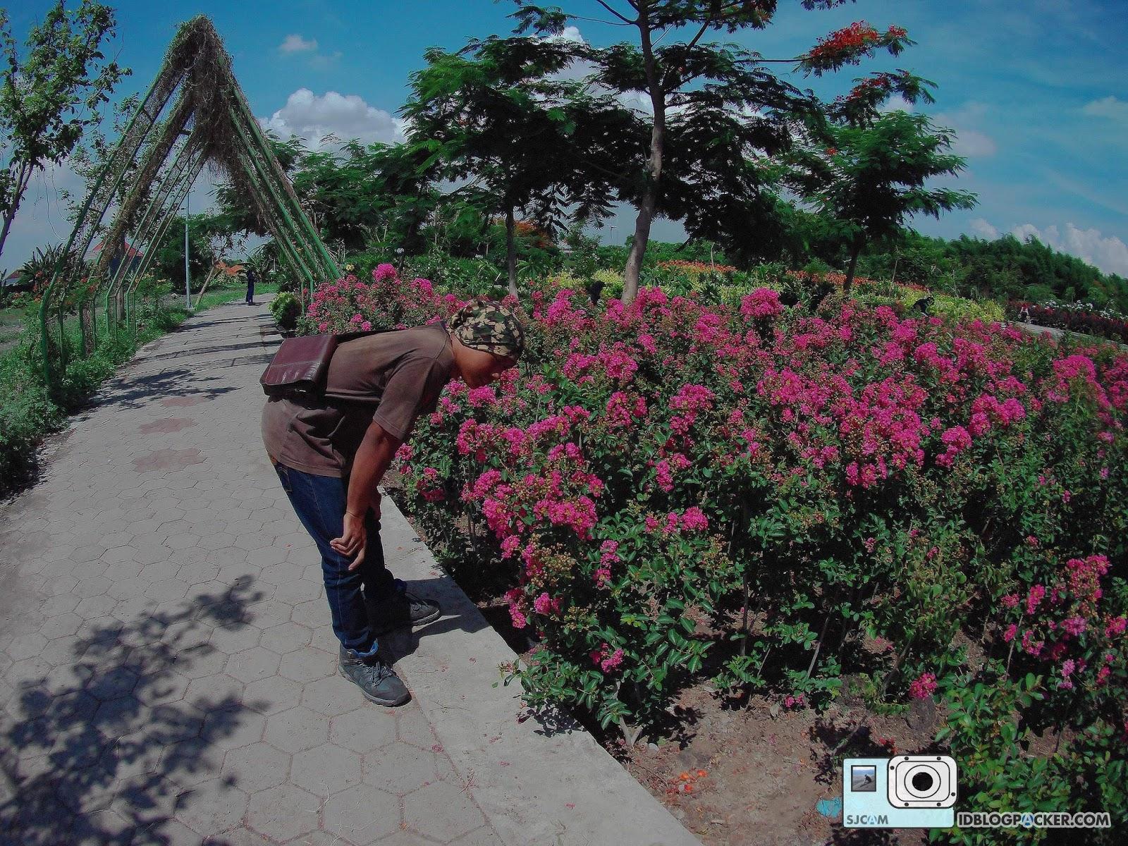 Taman Sakura Surabaya Travelresources Keputih Kota