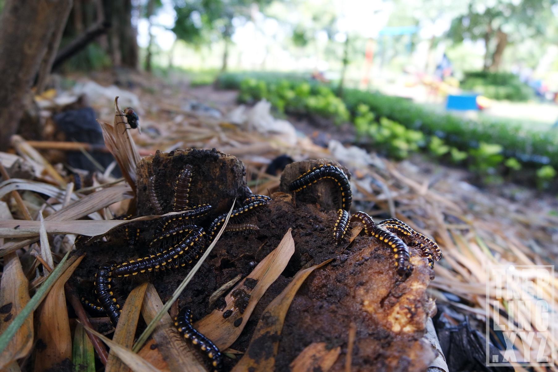 Wisata Alam Hutan Bambu Taman Sakura Keputih Surabaya Penunggu Jangan