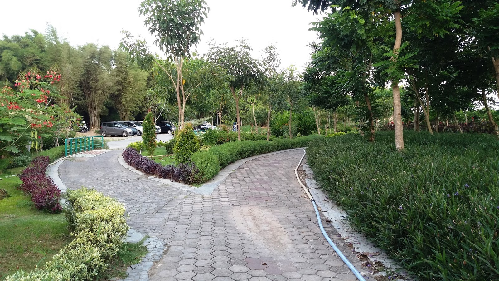 Wisata Surabaya Taman Bunga Sakura Keputih Haya Zone View Kota