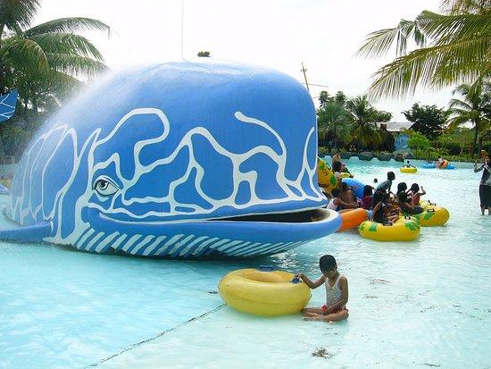 Kolam Renang Ikan Paus Picture Ciputra Waterpark Surabaya Wisata Kota