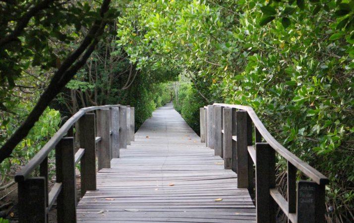 7 Taman Wisata Hutan Mangrove Terbaik Indonesia Wisatalah Wonorejo Kota