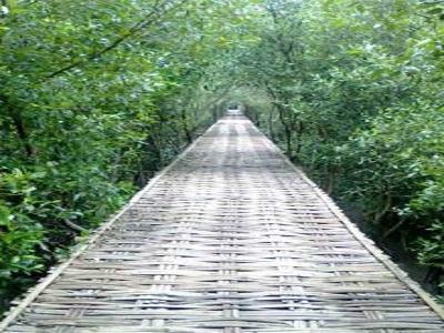Alamat Ekowisata Hutan Mangrove Wonorejo Surabaya Harga Tiket Wisata Gunung