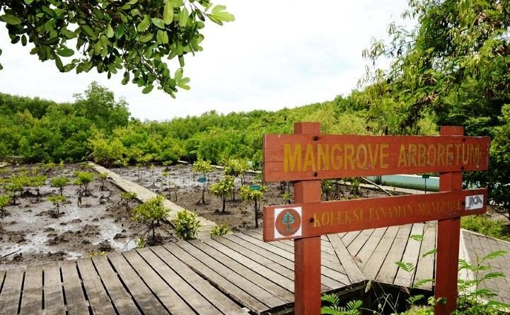 Berwisata Hutan Mangrove Surabaya Yuk Asyik Lho Reresepan Wisata Wonorejo