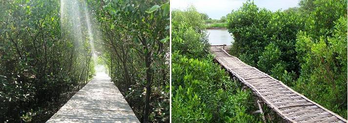 Ekowisata Hutan Mangrove Surabaya Wisata Wonorejo Kota