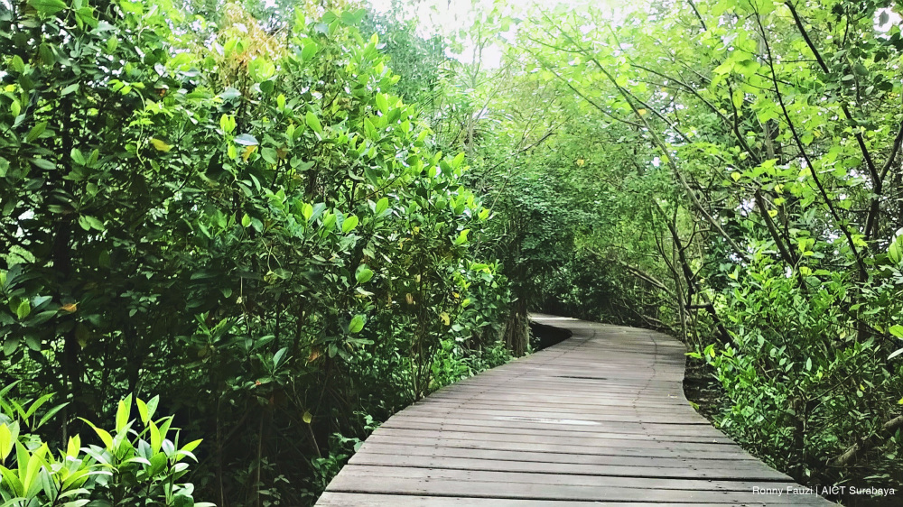 Ekowisata Mangrove Wonorejo Eksotisme Hutan Bakau Ujung Surabaya Jogging Track