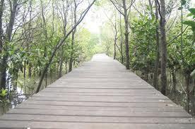 Ekowisata Mangrove Wonorejo Nikmati Suasana Hutan Wisata Menyajikan Keindahan Berlokasi