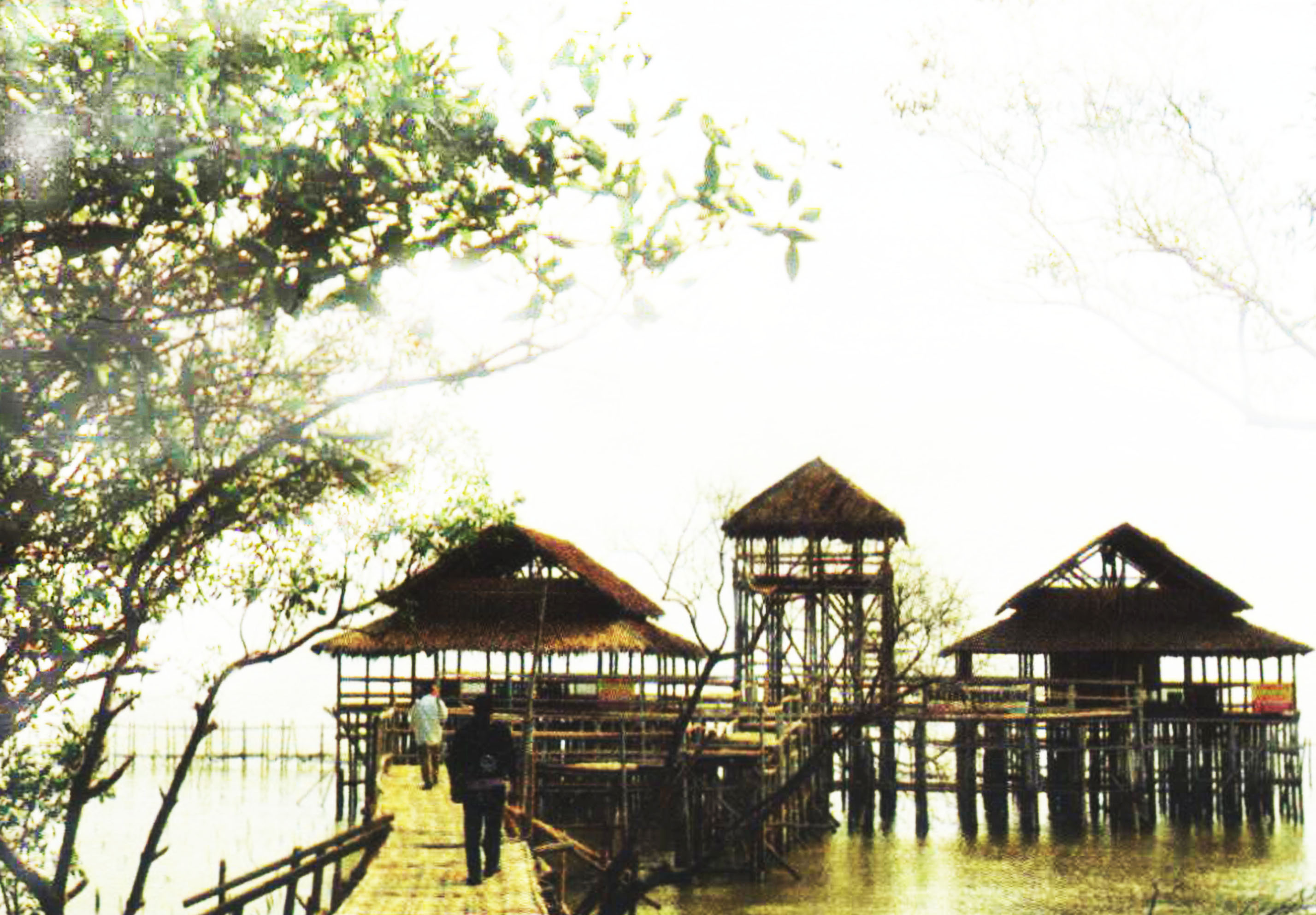 Ekowisata Mangrove Wonorejo Surabaya Wisata Jawatimuran 2 Hutan Kota