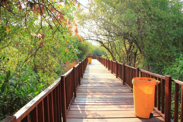 Harga Tiket Masuk Taman Wisata Hutan Mangrove Wonorejo Surabaya Kota