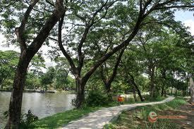 Hotel Sekitar Daerah Wisata Hutan Mangrove Wonorejo Klikhotel Kebun Bibit