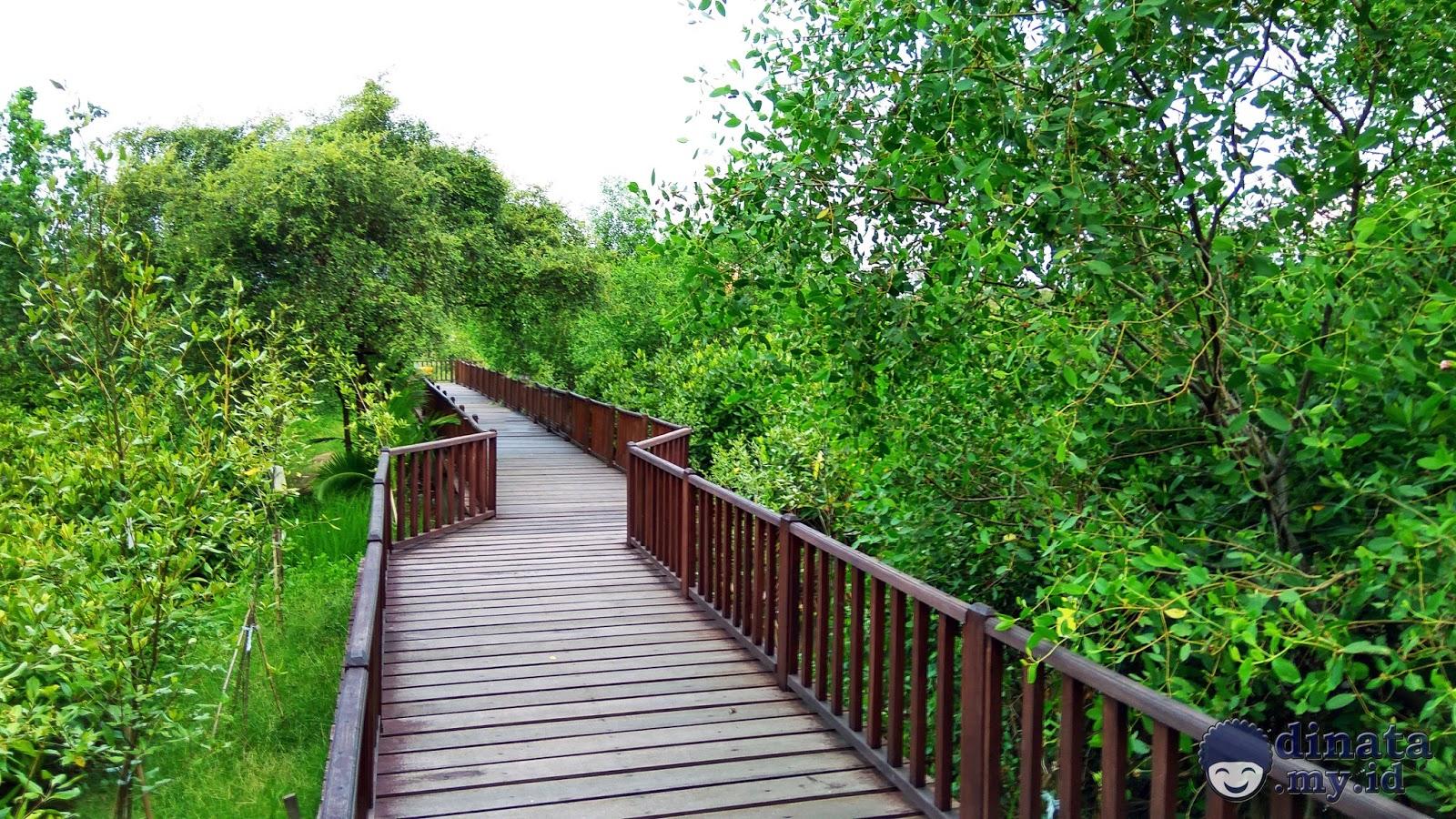 Hutan Mangrove Surabaya Galeri Wisata Asyik Wonorejo Kota