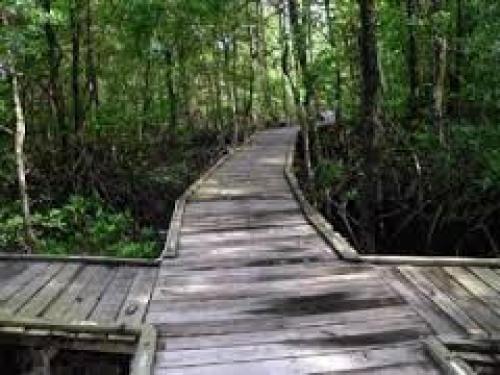 Hutan Mangrove Wisata Ngadem Surabaya Beritajatim Wonorejo Kota