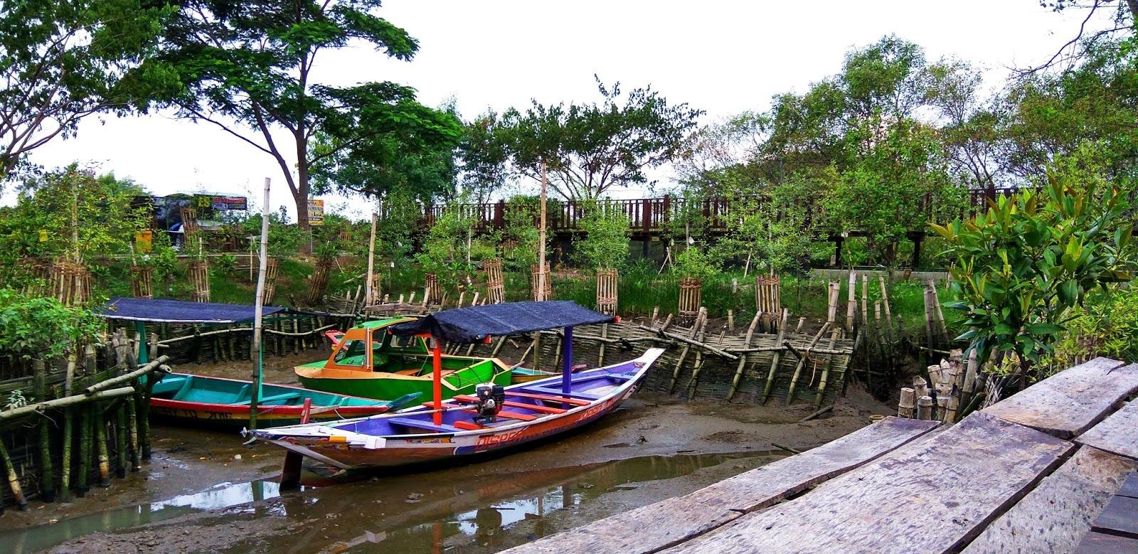 Hutan Mangrove Wonorejo Destinasi Wisata Lingkungan Lokasi Ekowisata Berada Jl