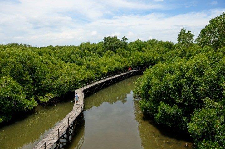 Hutan Mangrove Wonorejo Eksis Surabaya Lihat Id Wisata Kota