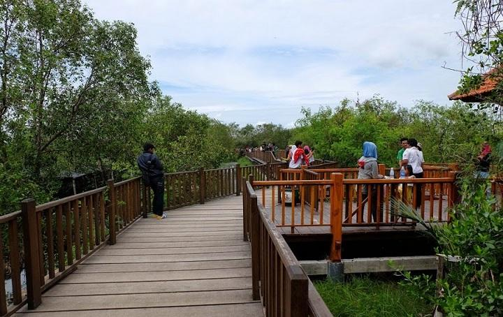 Hutan Mangrove Wonorejo Pesona Tengah Kota Surabaya Sportourism Id Wisata