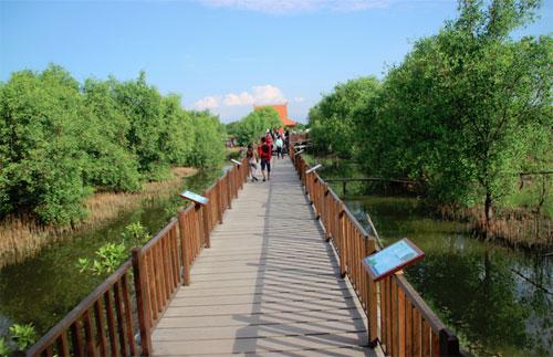 Hutan Mangrove Wonorejo Surabaya 1001malam Wisata Kota