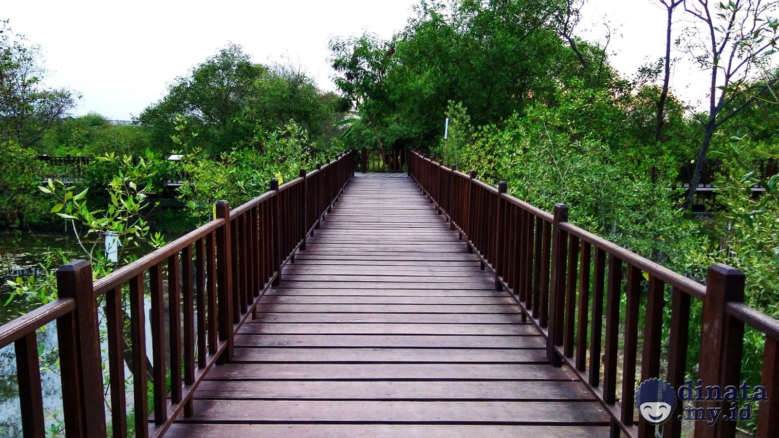 Hutan Mangrove Wonorejo Surabaya Rimbunnya Bakau Dinata Wisata Kota