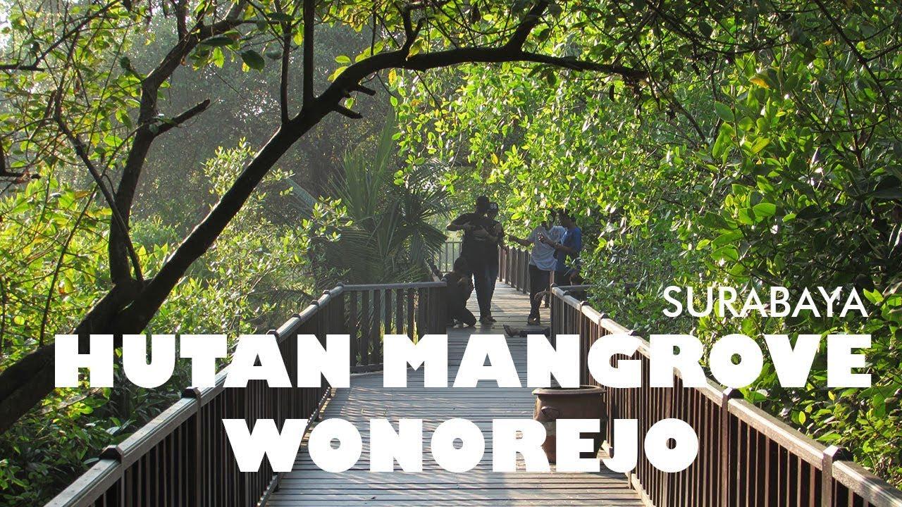 Hutan Mangrove Wonorejo Tempat Ngadem Yg Serasa Bukan Surabaya Wisata