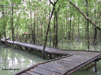 Info Wisata Hutan Mangrove Surabaya Pesatnya Pembangunan Kota Membuat Sebagai