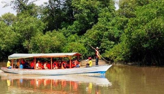 Infromasi Lengkap Hutan Mangrove Wonorejo Surabaya Alami Lihat Artikel Lengkanya