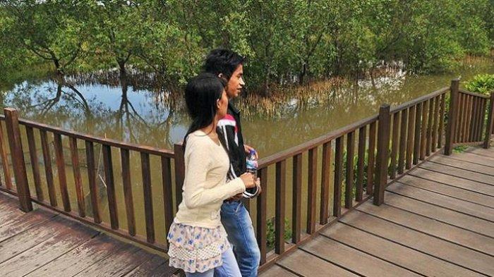 Jadi Tempat Wisata Surabaya Hutan Mangrove Mampir Burung Belahan Dunia