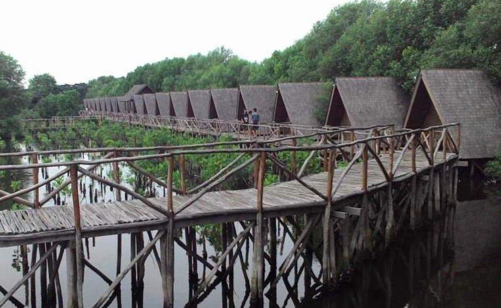 Lima Destinasi Wisata Mangrove Indonesia Mangrovemagz Hutan Wonorejo Kota Surabaya