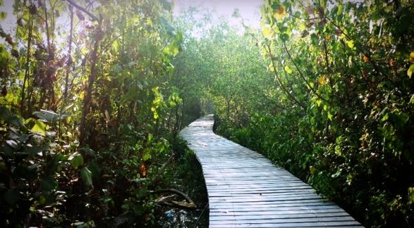 Menikmati Kesejukan Surabaya Wisata Hutan Mangrove Wonorejo Kota