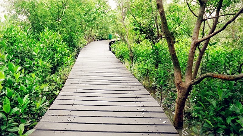 Menikmati Wisata Hutan Mangrove Wonorejo Surabaya Anugerah Hidup Lokasi Kota