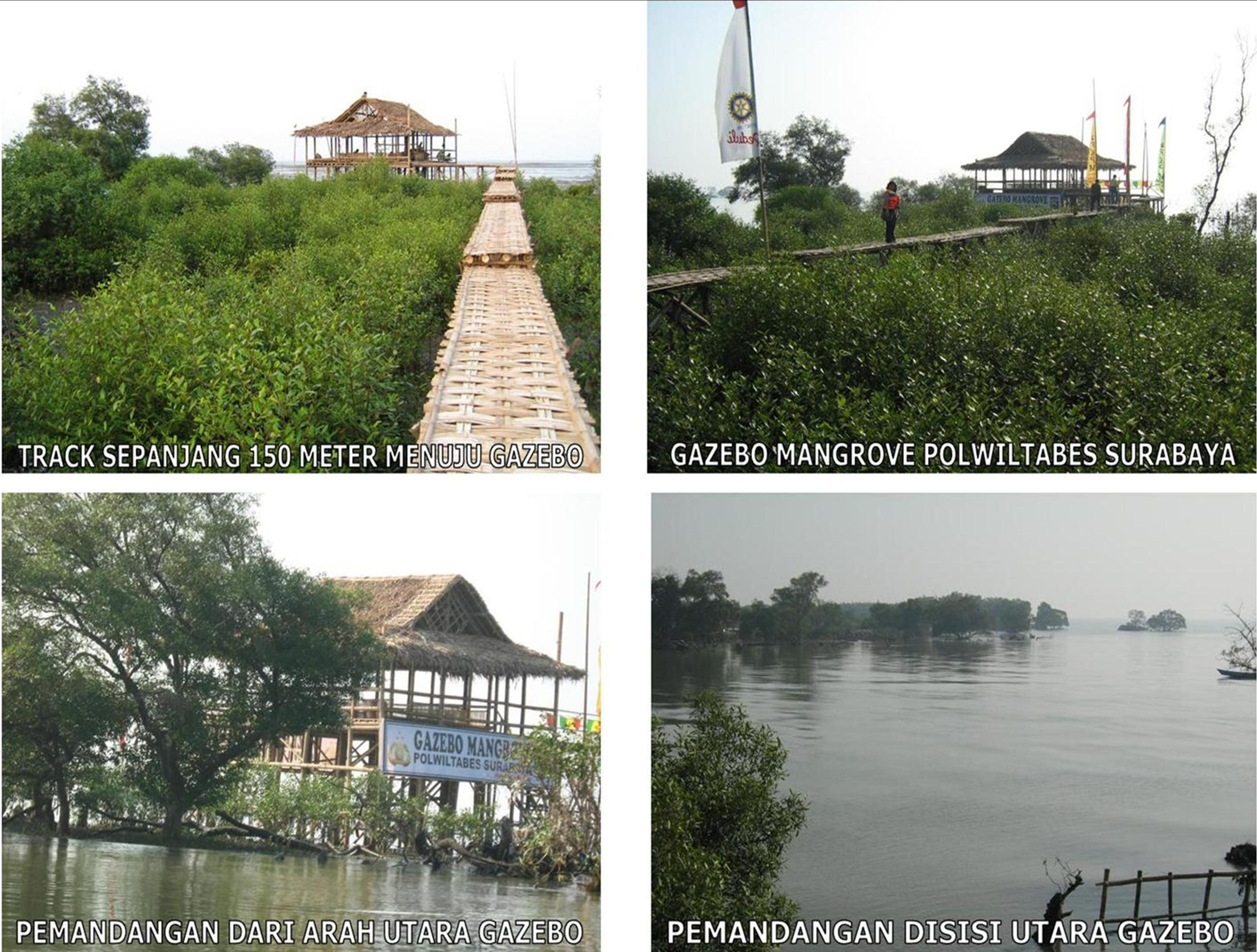 Picnic Hutan Wisata Mangrove Surabaya Tidak Tahu Panas Memiliki Bernama