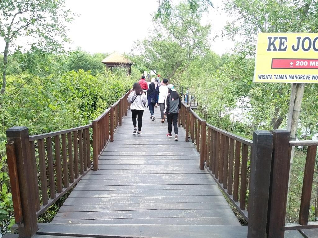 Sejenak Menunggu Rindangnya Hutan Mangrove Wonorejo Surabaya Jembatan Kayu Wisata