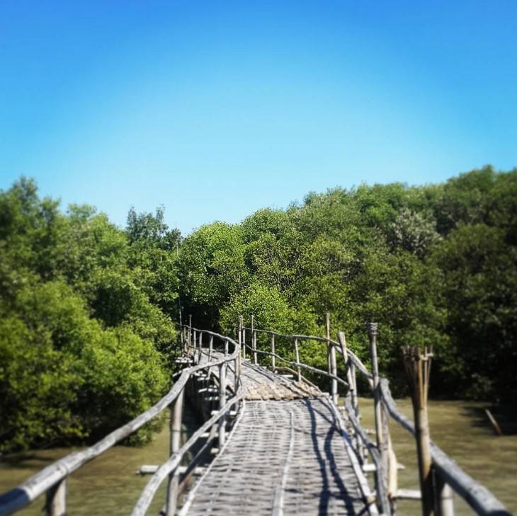 Tempat Wisata Mangrove Wonorejo Rame Informasi Hutan Surabaya Kota