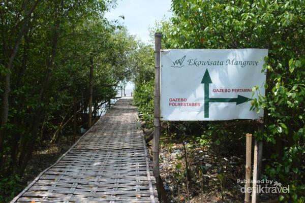 Weekend Segar Surabaya Ayo Hutan Mangrove Wonorejo Jogging Track Wisata