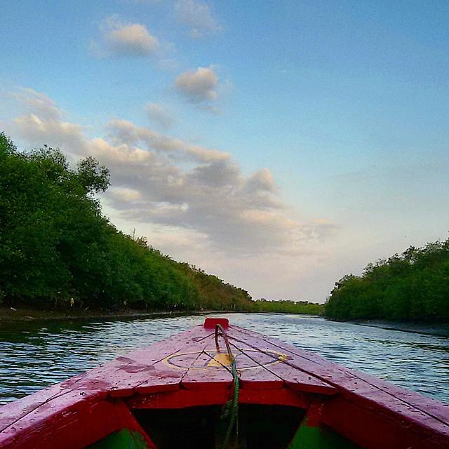 Wisata Alam Hutan Mangrove Wonorejo Hijau Penyelamat Kota Surabaya Nukenoor