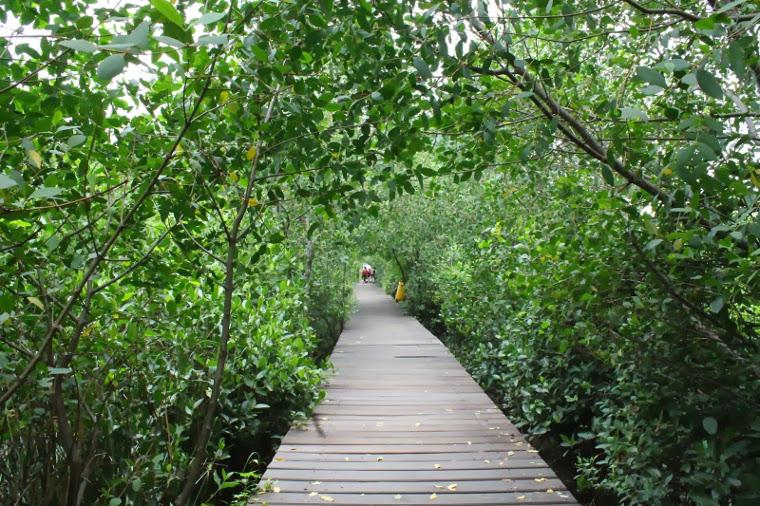 Wisata Alam Hutan Mangrove Wonorejo Surabaya Airy Rooms Blog Kota