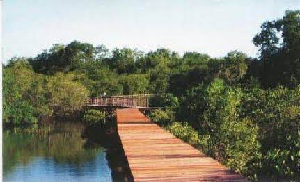 Wisata Anyar Mangrove Alternatif Bahari Alami Surabaya Mangrove3 Penghijauan Lingkungan