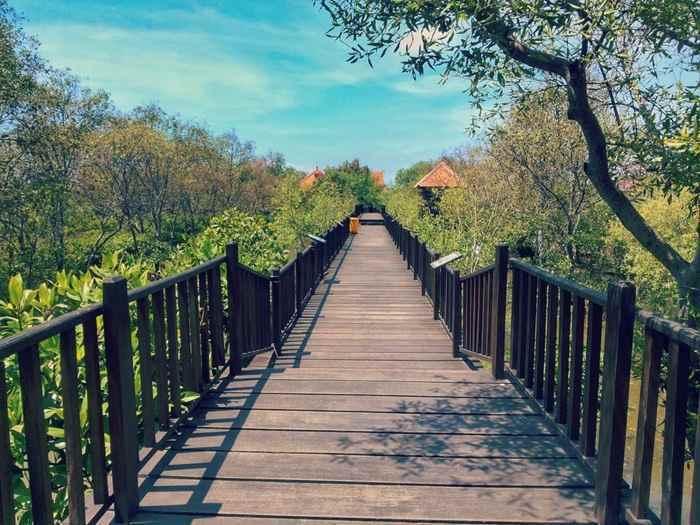 Wisata Hutan Mangrove Jawa Timur Instagram Traveling Yuk Wonorejo Kota