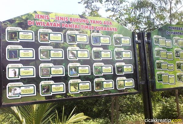 Wisata Hutan Mangrove Surabaya Dikunjungi Wonorejo Kota