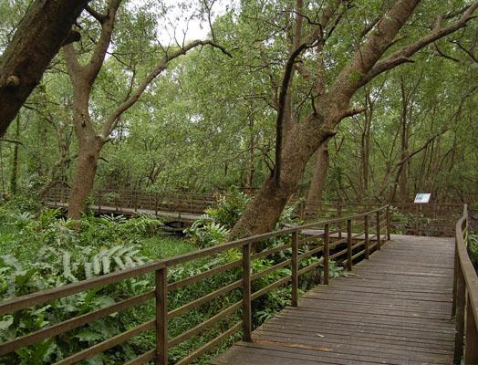 Wisata Hutan Mangrove Wonorejo Suite Hotel Amithya 3 Full Mg1