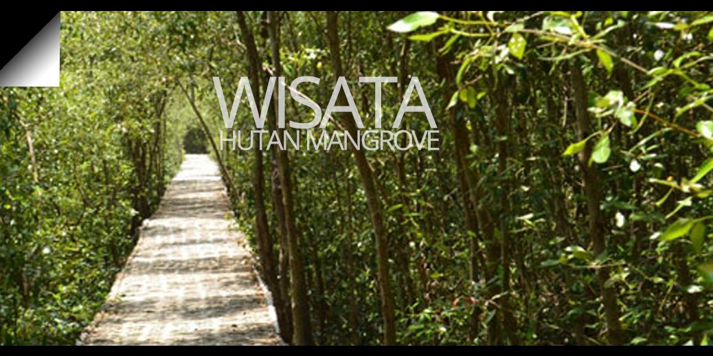 Wisata Hutan Mangrove Wonorejo Suite Hotel Amithya 3 Lifestyle Surabaya