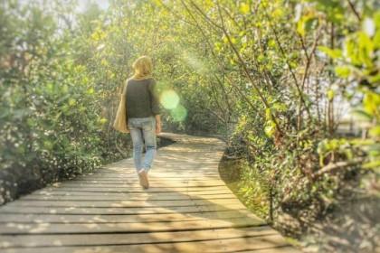 Wisata Mangrove Indah Jawa Timur 3 Hutan Wonorejo Kota Surabaya